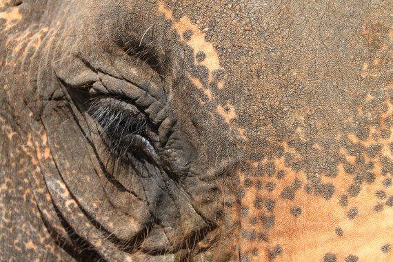 Un paseo con elefantes en Chiang