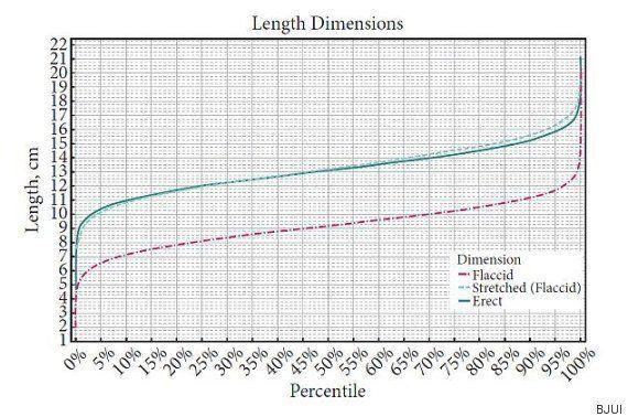¿Cuánto mide un pene normal? Un nuevo estudio da datos más