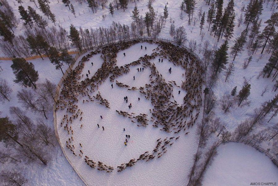 Estas espectaculares fotos de renos en Noruega esconden un secreto