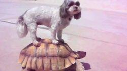 Amistades insólitas en el mundo animal