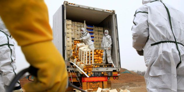 La razón por la que China ha destruido así 20 toneladas de cítricos