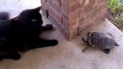 El gato se lo pasa bomba... la tortuga ya no tanto