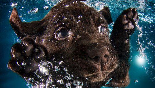 ¡Perro al agua!