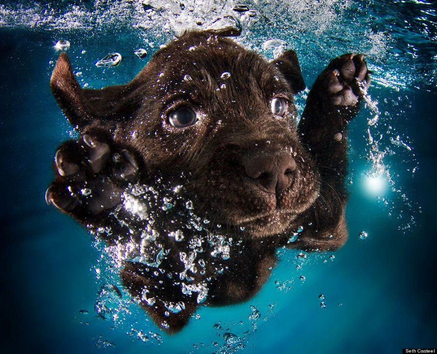 Perros bajo el agua: las fotografías de animales nadando Seth Casteel