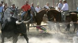 PSOE y PP de Tordesillas apoyan el recurso ante el TC para permitir el Toro de