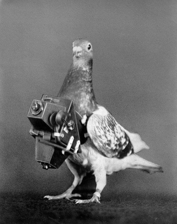 Un repaso por los animales usados como espías a lo largo de la