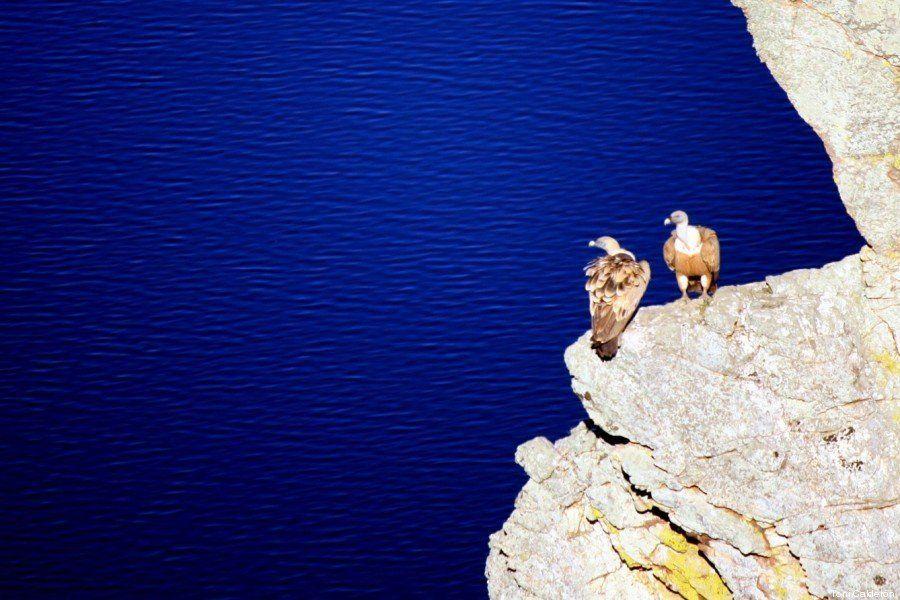 Los ocho mejores lugares para avistar aves en España