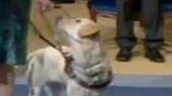 El perro Breezy, protagonista en los Premios Príncipe de Asturias