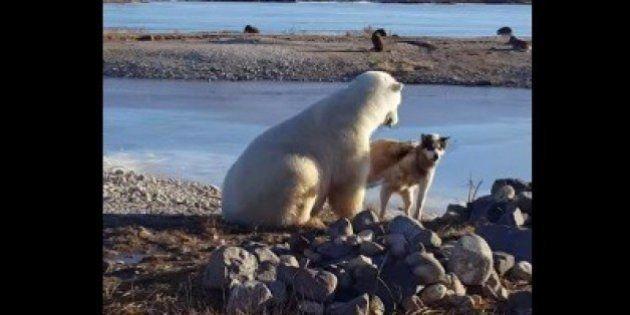 El lado oscuro tras este vídeo de un oso acariciando a un