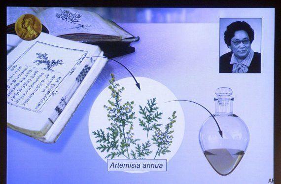 Premio Nobel de Medicina 2015: William C. Campbell, Satoshi Omura y Youyou Tu por su lucha contra las...