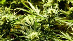 La marihuana 'te quema el cerebro', y causa