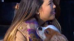 El reencuentro con su perro de la enfermera de Dallas que superó el ébola