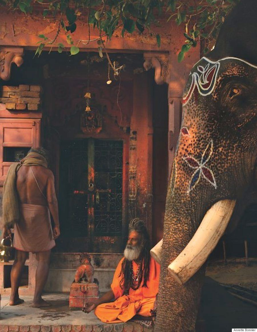 Elefantes en la India: criaturas espirituales y