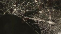La operación araña, Gramsci y semiótica