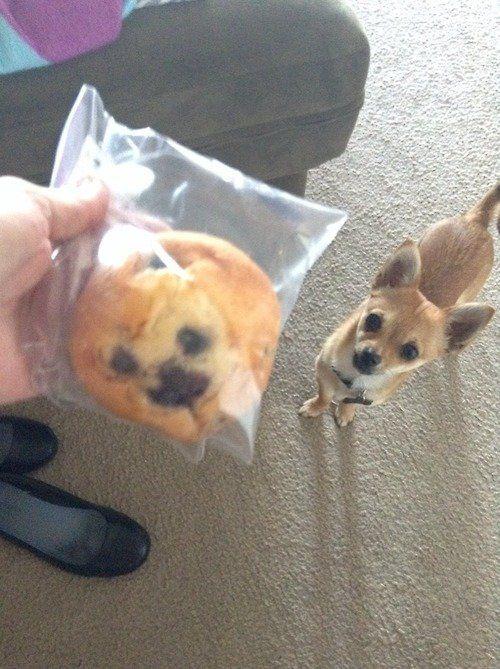 13 perros que se parecen a otras cosas que no son