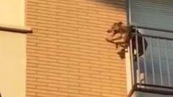 La historia del perro desatendido que se lanzó desde un tercer