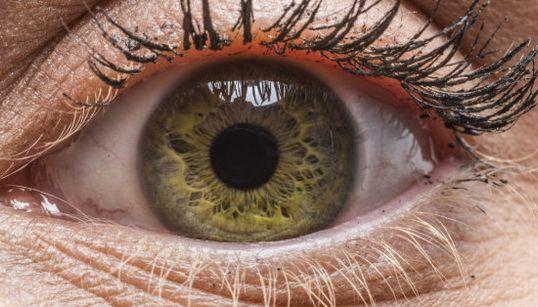 La sorprendente diversidad del ojo