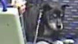 El cruel maltrato a este perro en un tren indigna al Reino