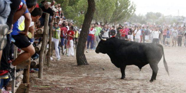 Marcha en Tordesillas para defender el torneo del Toro de la