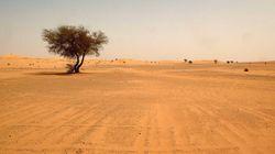 Hallados 87 inmigrantes muertos de sed en el desierto de