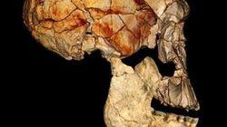 El homo erectus ya andaba como el hombre moderno hace 1,5 millones de