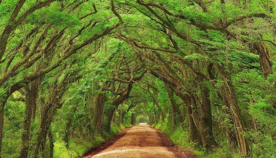 Diez túneles de arboles en los que querrás adentrarte