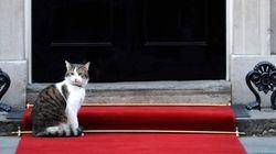 Cameron se va de Downing Street pero deja a su gato
