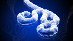 Se terminó el ZMapp, el fármaco experimental contra el ébola. ¿Ahora