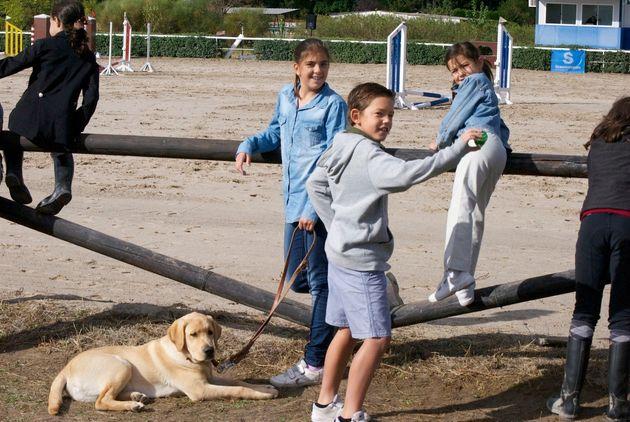 Acoger perros guía: una familia dedica un año a educar un futuro acompañante de