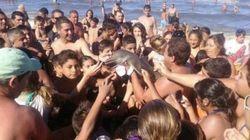 La foto con un bebé delfín que pone de manifiesto la estupidez
