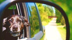 44 perros que no quieren que acabe el verano