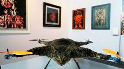El gato-helicóptero