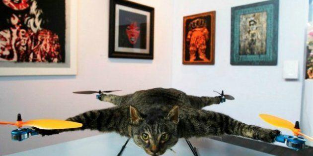 Gato-helicóptero: obra de arte en Ámsterdam (FOTO,