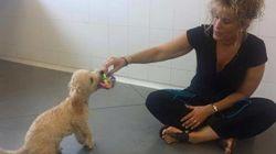 Buddy: el perro que aún no ha podido llegar a su