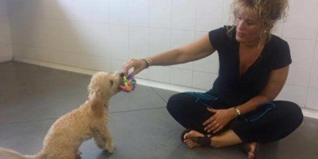 El calvario de Buddy: el perro retenido desde el viernes en el
