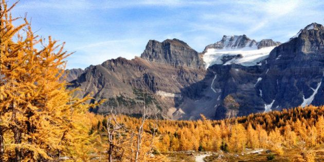 Picture of the yellow larches in Fall,at Valley of the ten peaks in