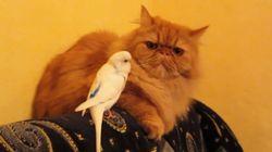 ¡Me parece haber visto un lindo gatito! La prueba de que los pájaros quieren ser amigos de los