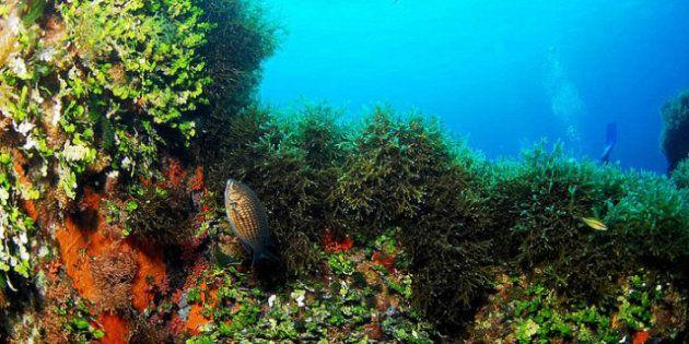 Salud de los océanos: los 'incendios' que arrasan el fondo del mar