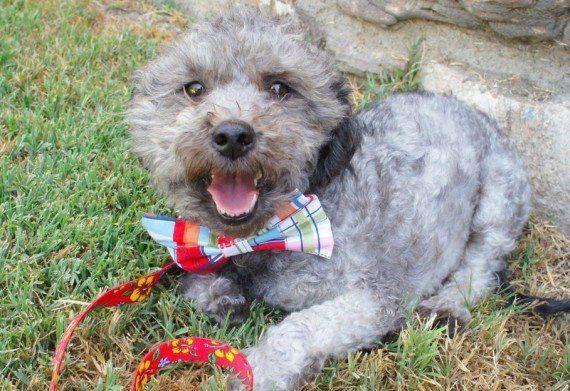 Transformación del perro Theo: así le cambió la vida tras un año abandonado