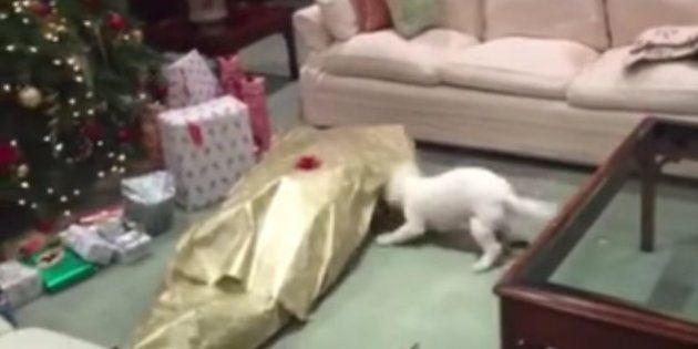 Ellos también tuvieron Navidad: perros abriendo sus