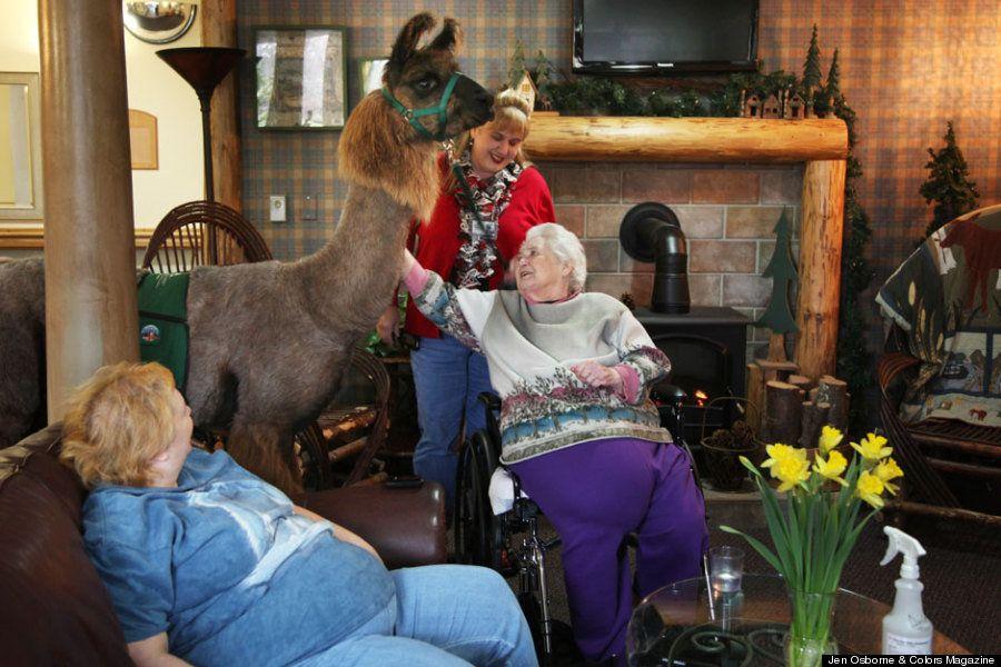 Llamaterapia: la fotógrafa Jen Osborne retrata el uso terapéutico de llamas