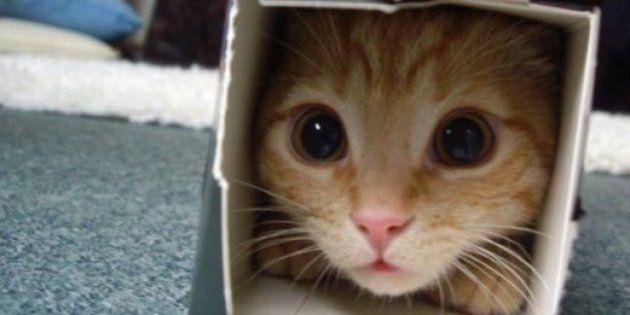 31 situaciones graciosas que sólo los dueños de gatos