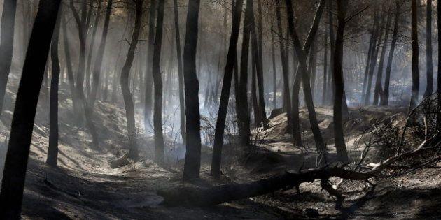 Detenido un pirómano en Galicia que provocó más de 150