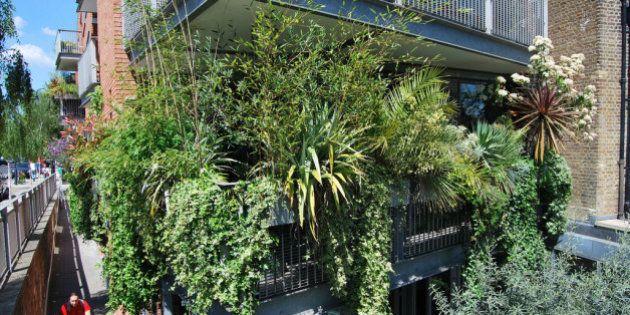Ocho plantas para que tu terraza parezca una