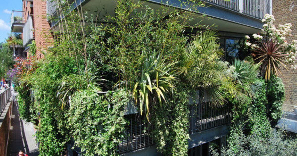 Ocho Plantas Para Que Tu Terraza Parezca Una Jungla El