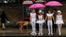 Ballet en Londres contra la
