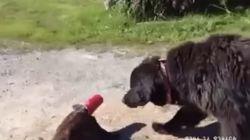 Si no llega a ser por este perro...