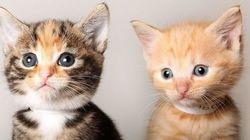 Si ya tienes gato... así se mete a otro en casa (o cualquier nuevo