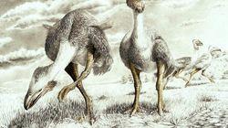Rastro de aves de cuando la Antártida estaba unida a