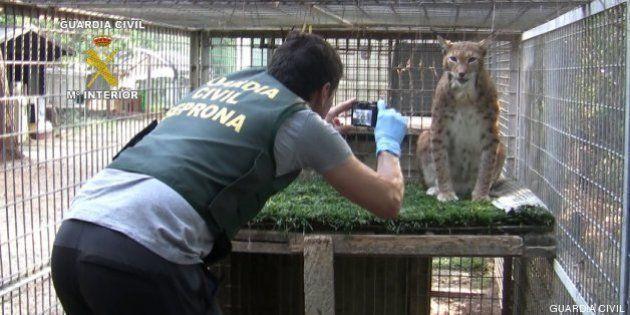 La Guardia Civil interviene 123 animales exóticos en un centro de cría ilegal y un núcleo